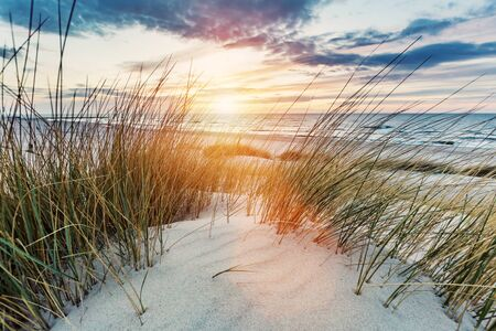Grassy dunes and the sea at sunset. Baltic Sea in Ustka Poland