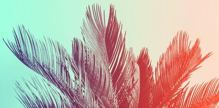 Duotone background of tropical palm leaves. Cycas revolutas, exotic plant.