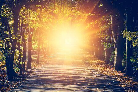 Strada verso il sole nel parco autunnale, luce che splende alla fine del sentiero. Concetto di speranza, mistero, religione Archivio Fotografico