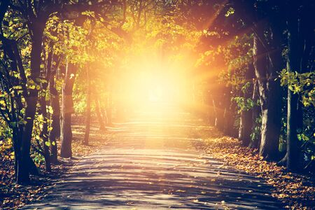 Way towards sun in autumn park, light shining at the end of the path. Concept of hope, mystery, religion
