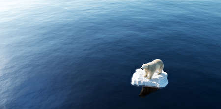 Polar bear on ice floe. Melting iceberg and global warming. Climate change Banque d'images