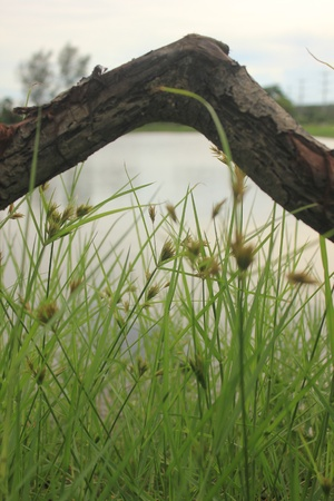 unwanted flora: Dry tree and The grass