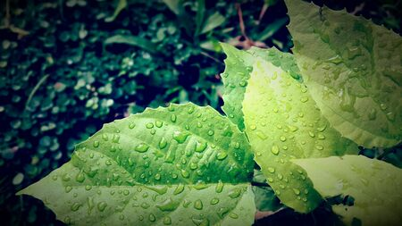 detail: Green leaf in the morning sin light with morning dew and water drops in a meadow Stock Photo