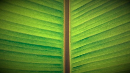 bright: Close up of a green leaf in bright sunlight Stock Photo