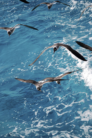 Seagulls flying over the blue sea, waves photo