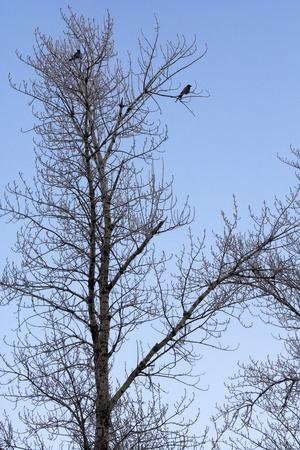 frozen trees: Beautiful view of frozen trees birds Stock Photo