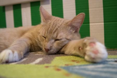 Small beautiful cat, colorful background photo