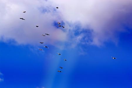 palomas volando: Hermosa vista de las palomas que vuelan, cielo azul, las nubes blancas