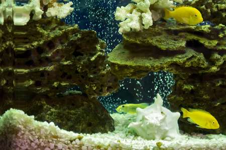 colorful fishes: Beautiful view of the aquarium, colorful fishes