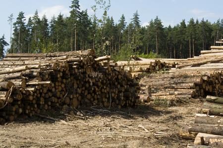 deforestacion: Vista de los deforestaci�n, troncos y madera