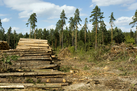 View of the deforestation, logs and wood