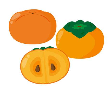 Persimmon vector illustration, autumn fruit