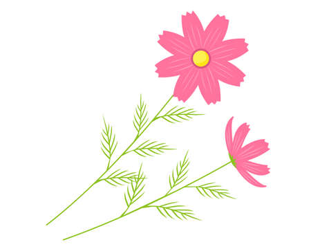 Vector illustration of cosmos flowers blooming in autumn .
