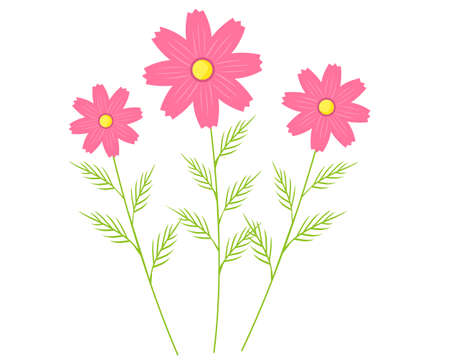 Vector illustration of cosmos flowers blooming in autumn . Illustration