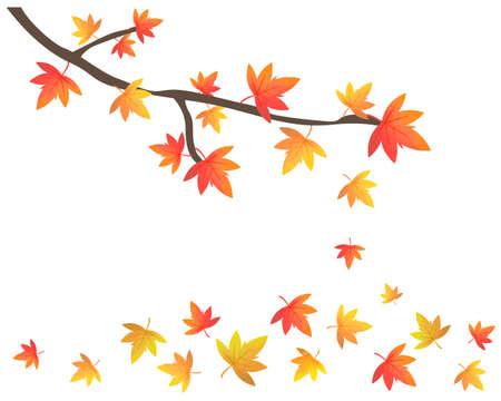Red Japanese maple leaves on white backrgound.