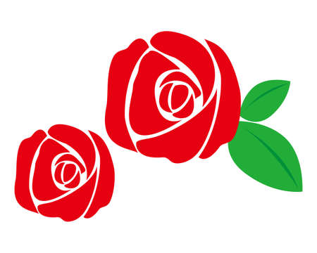 Vector illustration of a pretty rose . Red rose