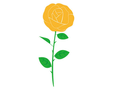 Vector illustration of a rose.  Yellow rose