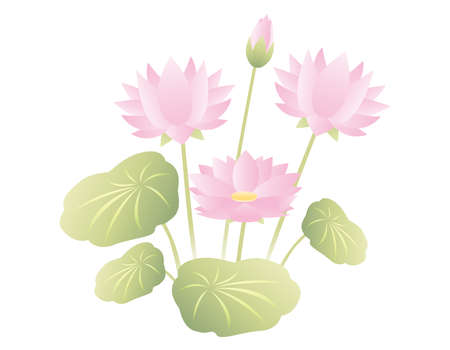 Vector illustration of lotus flower. Blooming flowers. Ilustração