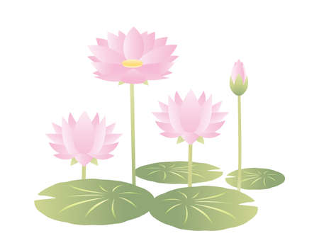 Vector illustration with water lily. Blooming flowers.