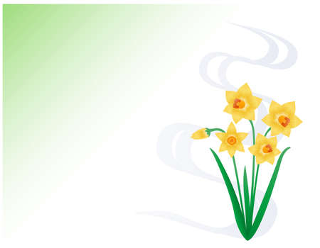 Yellow daffodil vector illustration. Blooming flowers. narcissus ..