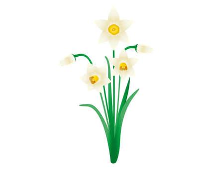Vector illustration of white daffodils. Blooming flowers. narcissus . Ilustração