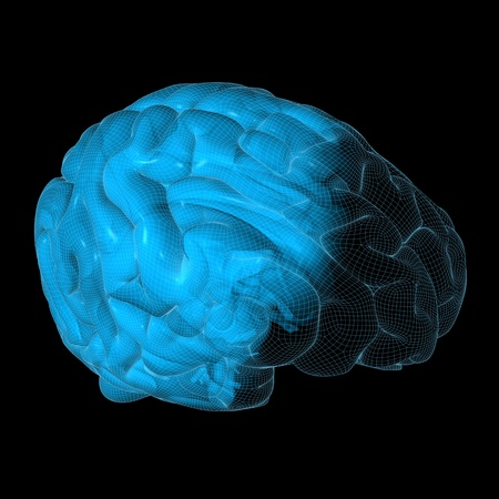 High resolution 3D illustration of a human brain. Wireframe concept Stock Illustration - 10786721