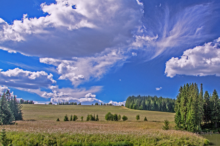 Summer view of the field, meadows with woods and Cumulus clouds in the blue sky, toned.