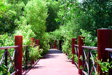 The bridge to the mangrove forest, a beautiful tourist destination suitable for holidays.