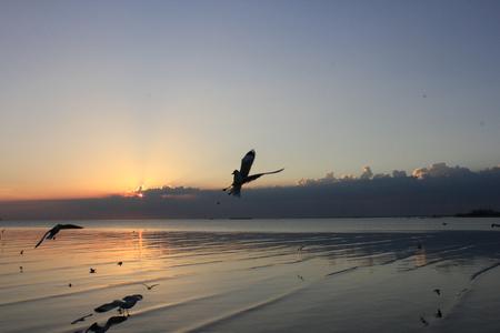 Seagull and sunrise