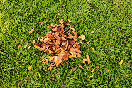 heaped: A pile of leaves Stock Photo