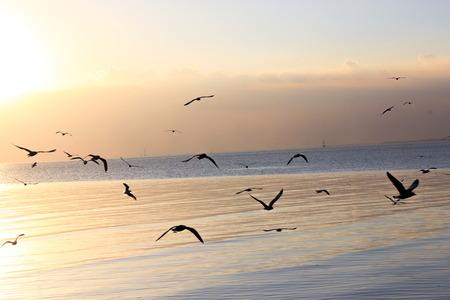 Evening sunset flying birds