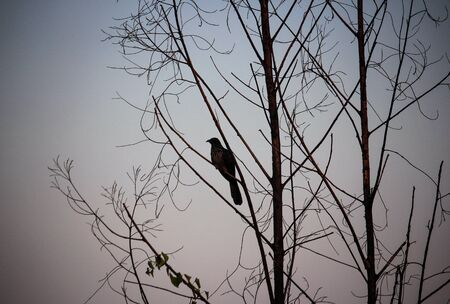 aves en el amor, la naturaleza pájaro de la vendimia Foto de archivo
