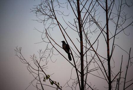 Vögel in der Liebe, Weinlese-Vogel-Natur