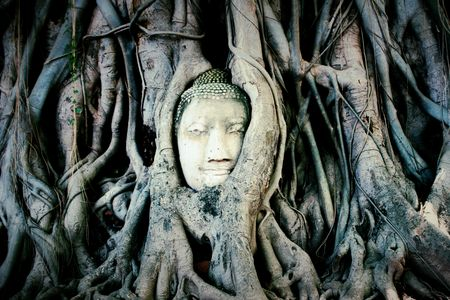 black and white, Head of Buddha statue in the tree roots at Wat Mahathat temple
