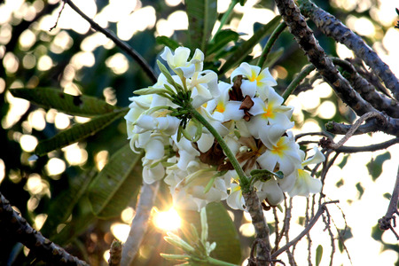 Flowers with sunset Stock Photo