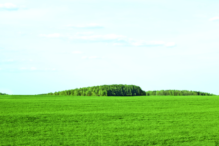 Panorama of beautiful countryside of belarus. Sunny afternoon. Wonderful springtime landscape. Grassy green field. Rural scenery
