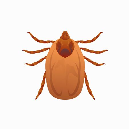 Deer tick isolated on white background Illustration