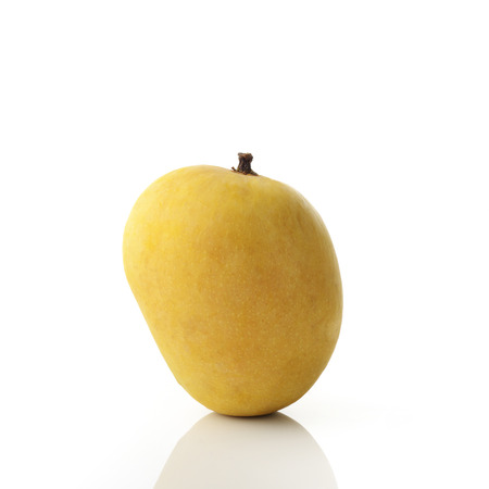 konkan: Golden Yellow Alphonso Mango on White Background