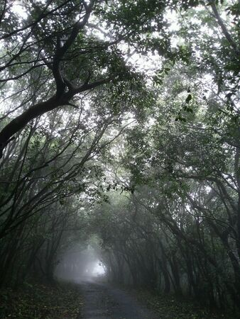 forest path: Image of foggy road
