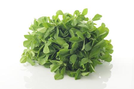 fenugreek: Fenugreek  Leaves