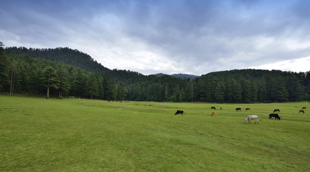 Khajjiar Hill Station Near Dalhousie