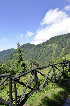 terracing: Himalayan Mountain Range with Cedar and Pine Forest