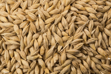 Food: Close up of Hulled Barley Shot in Studio 写真素材
