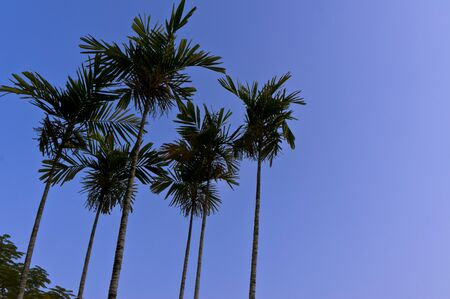 Nice blue sky with beautiful palm photo