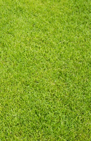 freshly lawn grass background