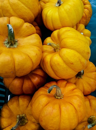 Fresh small pumpkin in the market photo
