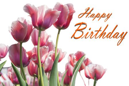 Happy Birthday card with Tulip flowers 스톡 콘텐츠