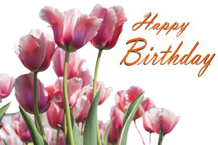 Happy Birthday card with Tulip flowers Standard-Bild