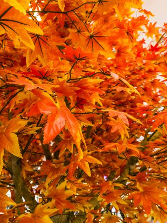 Selective focus of artificial maple leaves for decoration Stock Photo