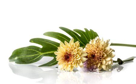 Two beautiful marigold,isolated on white background Standard-Bild - 131976814